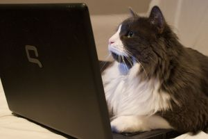1024px-Cat_on_laptop_-_Just_Browsing