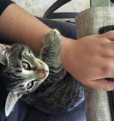 "My cat, ""helping"" me write."