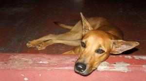 800px-Sad_dog_looking_into_eyes